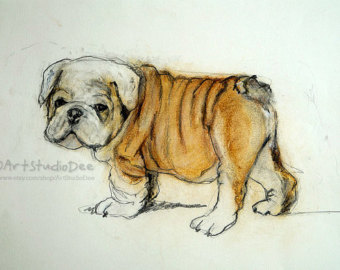 Drawn bulldog pencil step by step Etsy Pastel English bulldog Portrait
