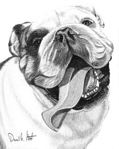 Drawn bulldog pencil step by step  the Bulldog pencil Bulldog
