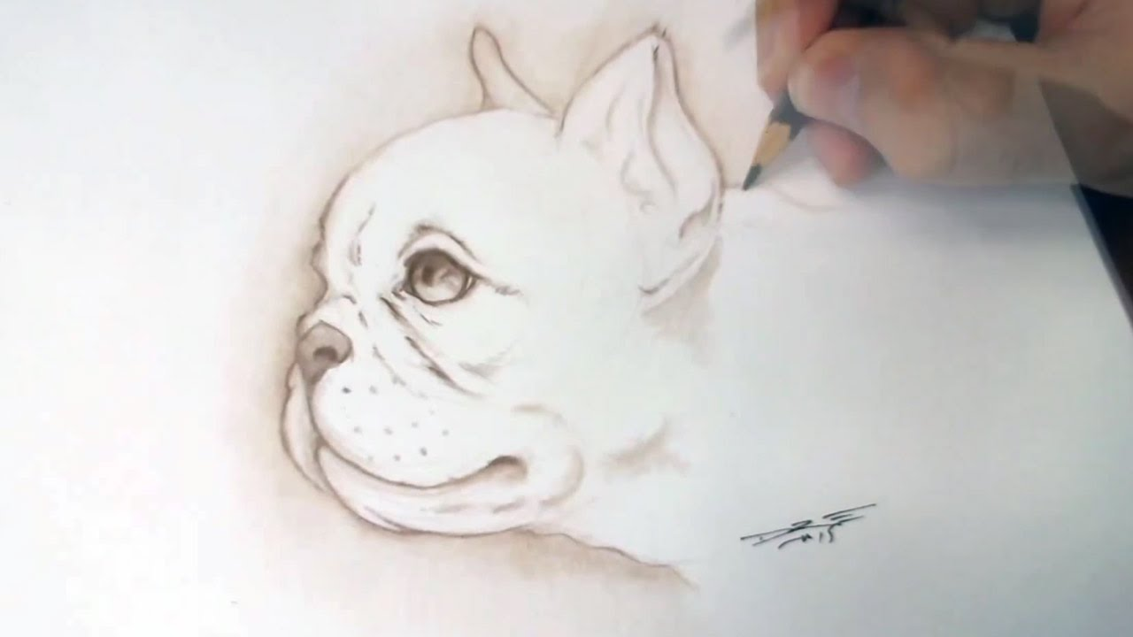 Drawn bulldog pencil step by step A Bulldog YouTube time to