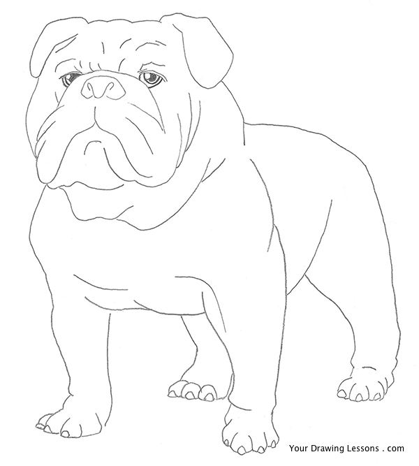 Drawn bulldog pencil step by step And Bulldog Draw  Drawings