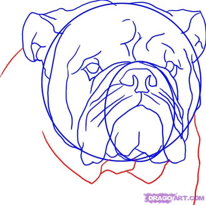 Drawn bulldog pencil step by step  Animals by english 7