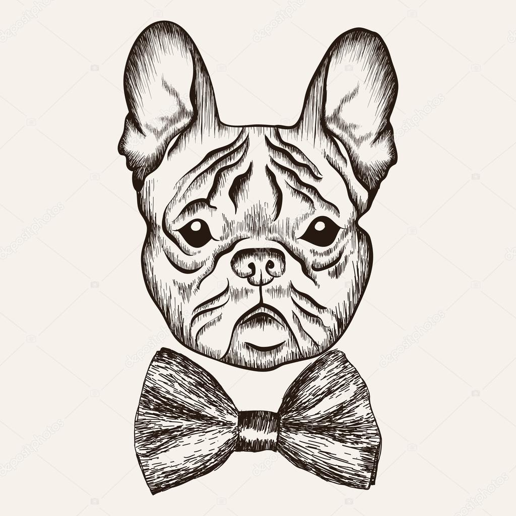 Drawn bulldog sketch Stock illustration Sketch  French