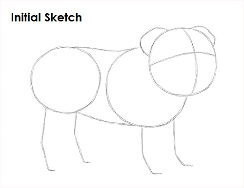 Drawn bulldog sketch Draw a Bulldog How Draw