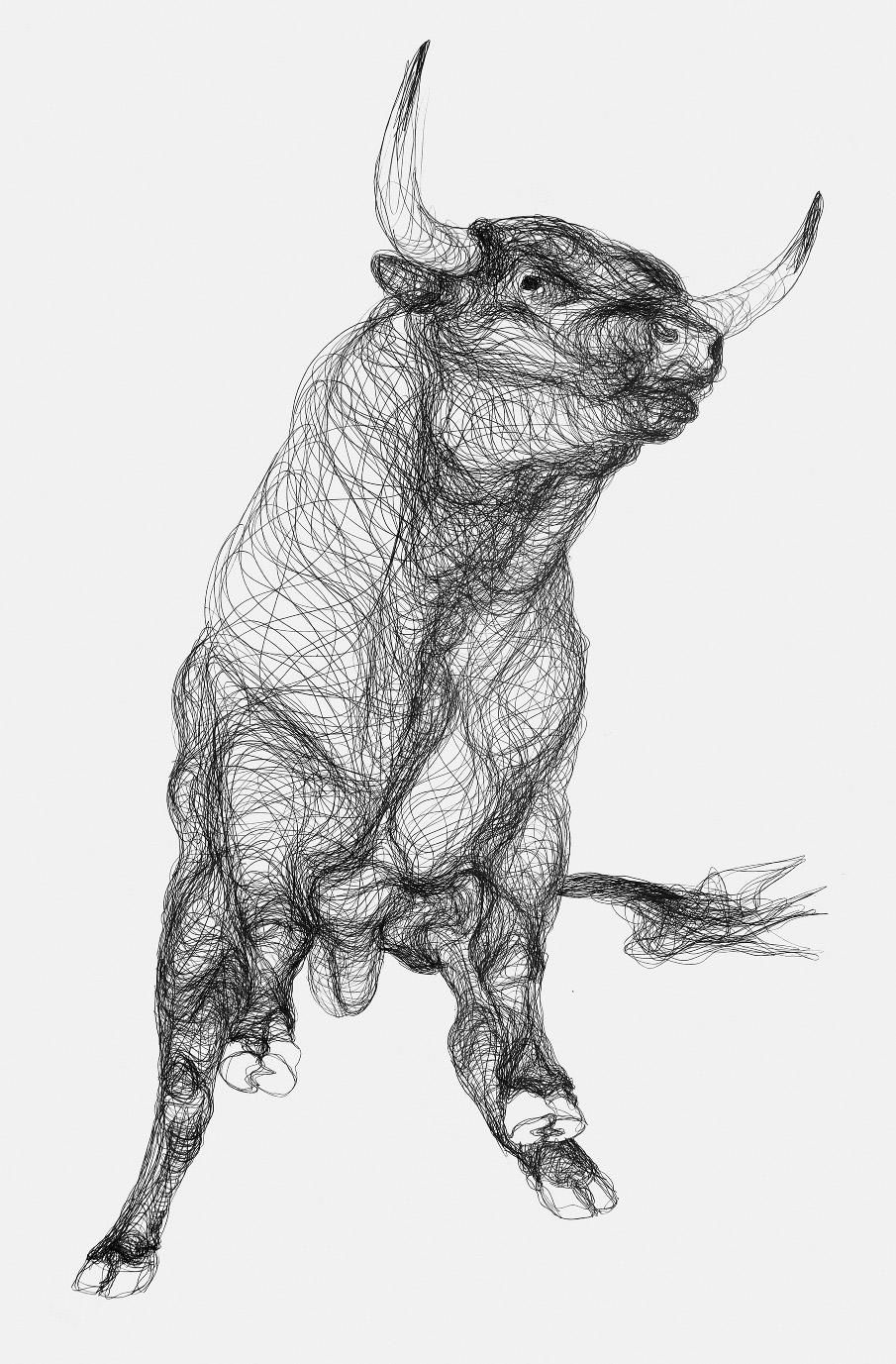 Drawn bulls Drawing Taurus and Maven Drawings