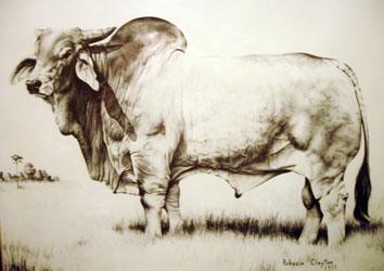 Drawn bull brahma bull American Breeders  Illustration Brahman