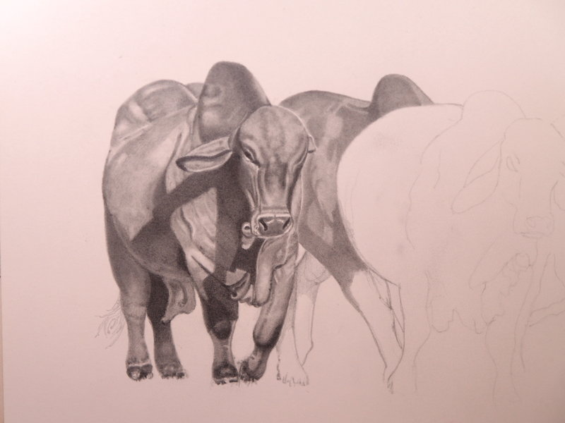 Drawn bull brahma bull Talker Horse The by DeviantArt