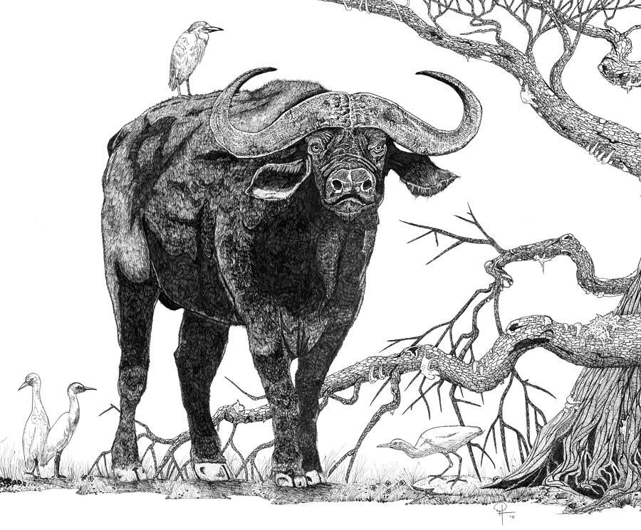 African Buffalo clipart Buffalo King Cape Buffalo the