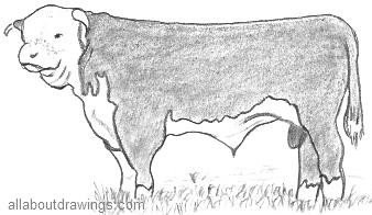 Drawn bull outline Drawing Drawings Bull in Hereford