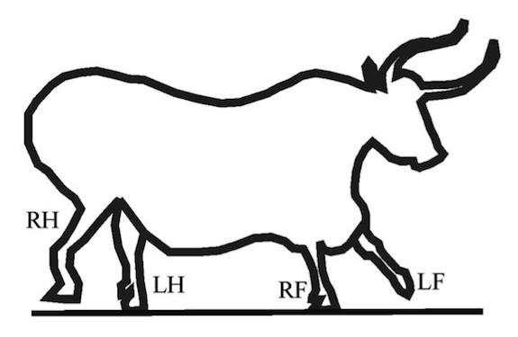 Drawn bulls simple Artists Illustrating image  bull