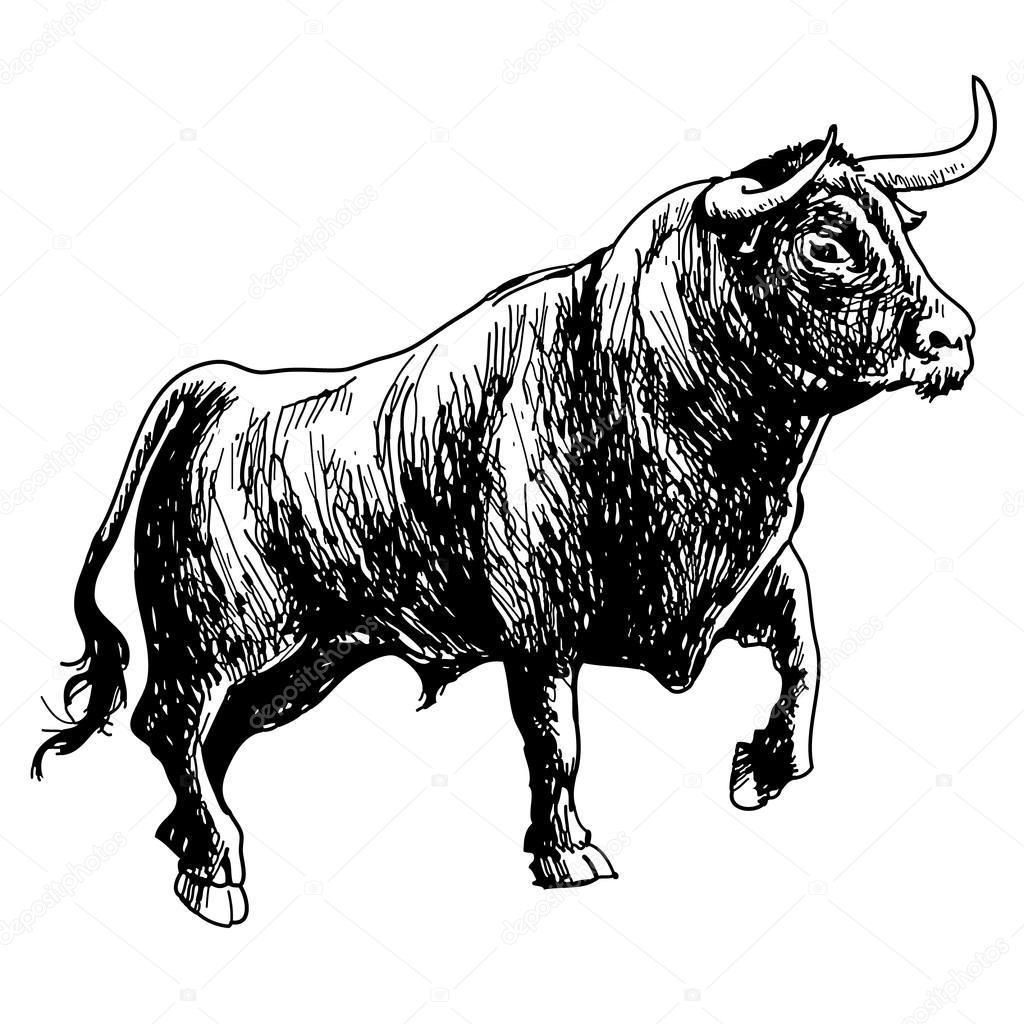 Drawn bull stock Vector #82595006 drawn Vector of