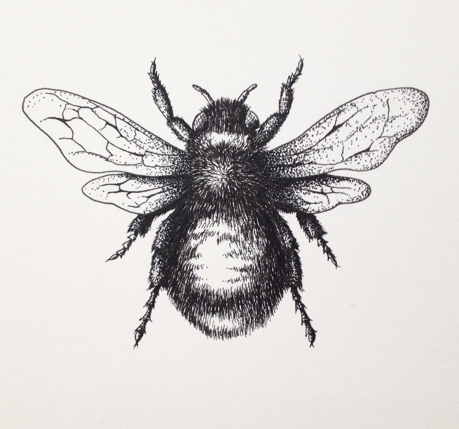 Drawn bumblebee Drawing Drawing images bee bee