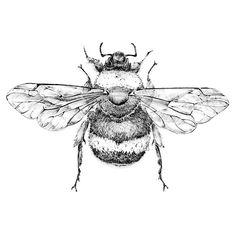 Drawn bumblebee Pictures 1 Bee coloring Bee