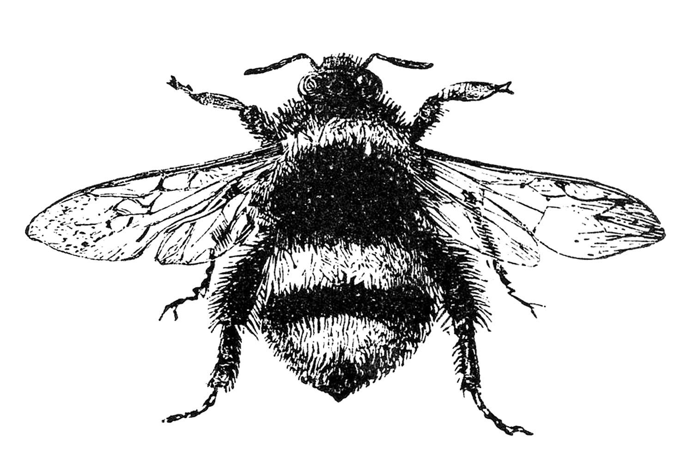Drawn bumblebee The Graphics Free Bumblebee Bumblebee
