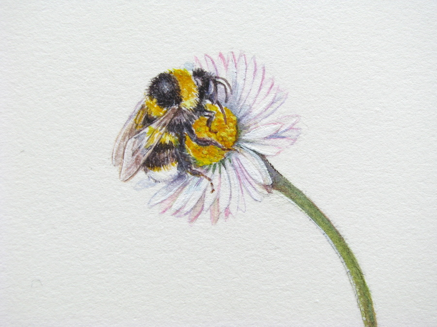 Drawn bumblebee botanical An our of Sketches art