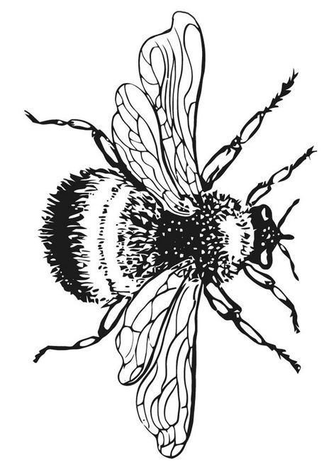 Drawn bumblebee botanical Best Bumble images 23 17