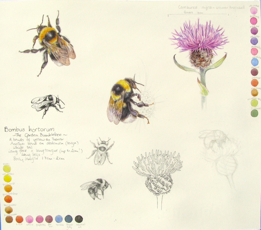 Drawn bumblebee botanical We can course own help