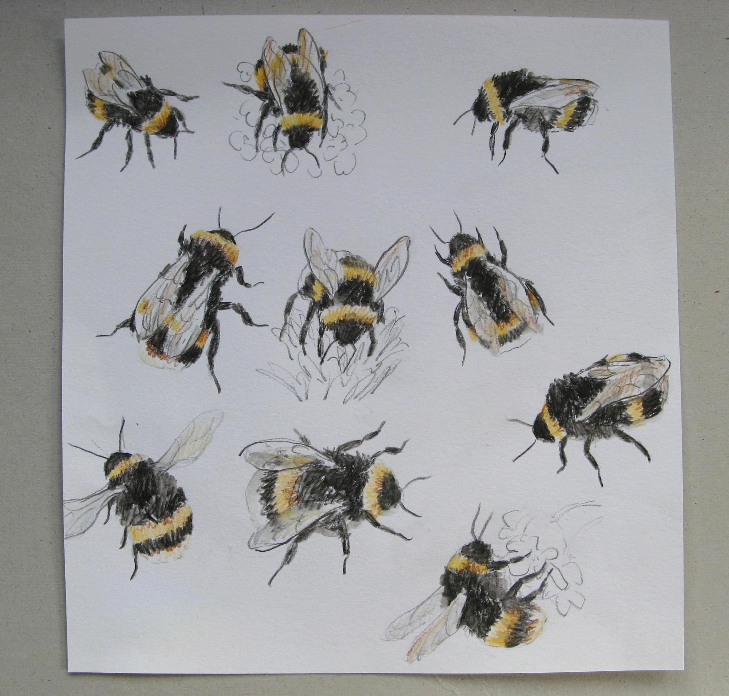 Drawn bumblebee botanical Drawings bee bumble agnesandcora hearts