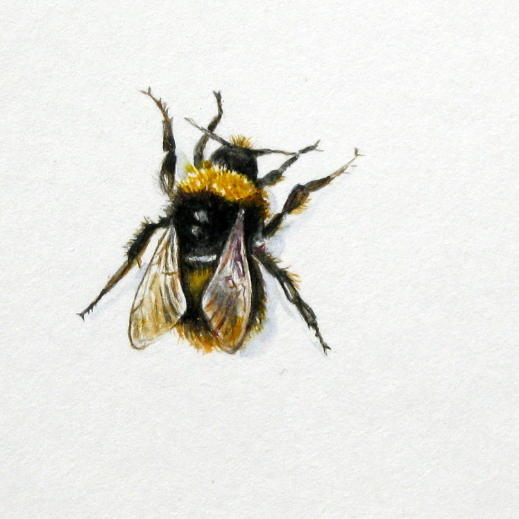 Drawn bumblebee botanical Hive flowers Spring Stories: a