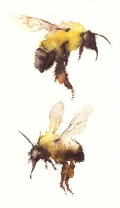Drawn bumblebee detailed Wonderful to identify I unable