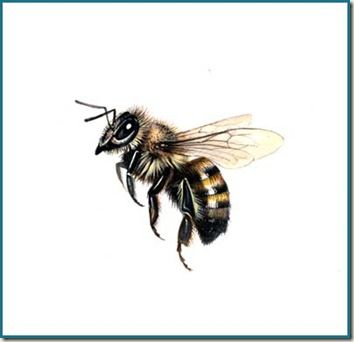 Drawn insect realistic Bee bee honey Honey Pinterest