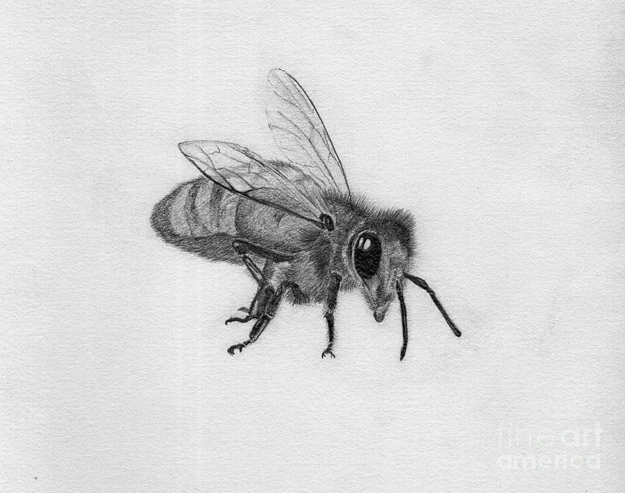 Drawn insect realistic Pinterest pencil insect pencil Search