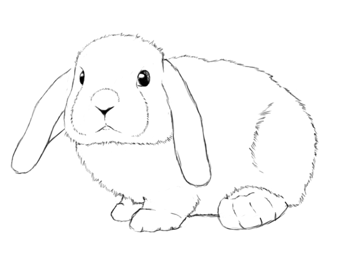 Drawn pice bunny How A Central Bunny Draw