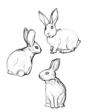 Drawn rabbit black and white 20+ on drawing ideas drawings