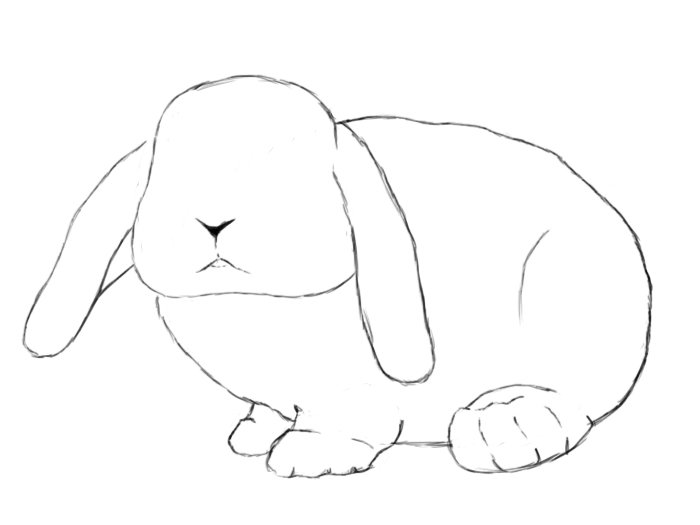 Drawn rabbit How Draw Draw A Bunny