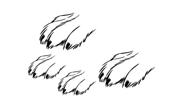 Drawn rabbid bunny tail And Hares Animals: to Draw