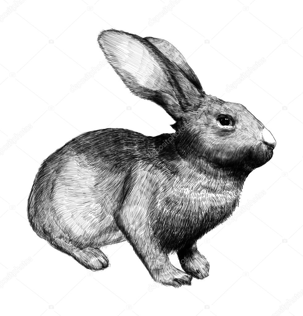 Drawn bunny hand drawn Onga Bunny Engraving Photo ©