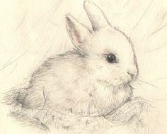 Drawn bunny pencil ~ 5
