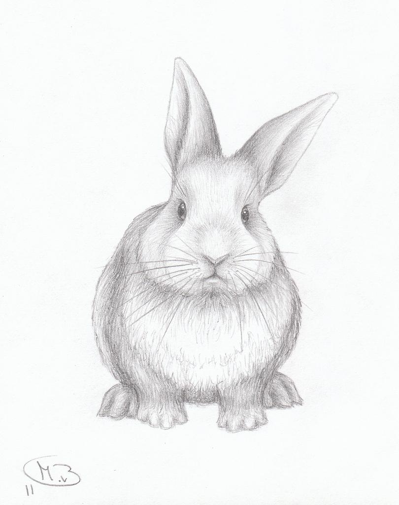 Drawn bunny pencil Bunny Art My Animal Van