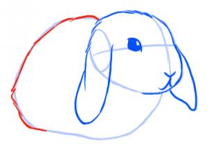 Drawn bunny step by step A Animals Bunny Step Online