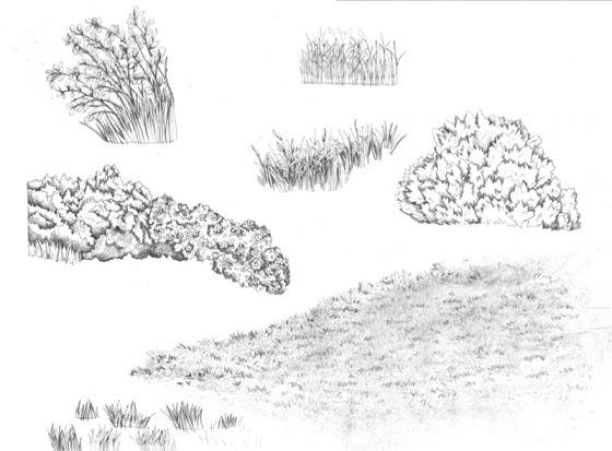 Drawn bush To best 53 Plants