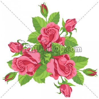 Drawn rose bush two Royalty purchased for or DrawShop
