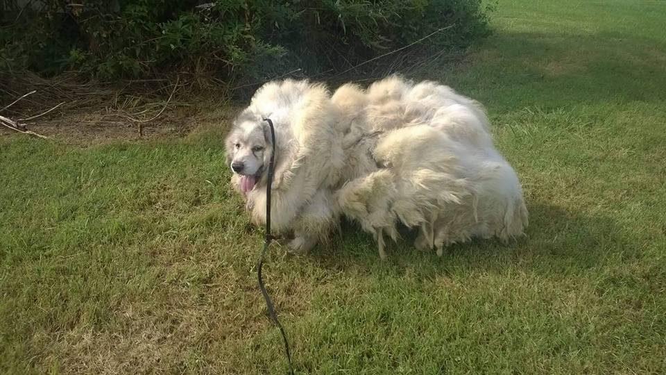 Drawn bush dog fur Com Loses Rover Pounds First
