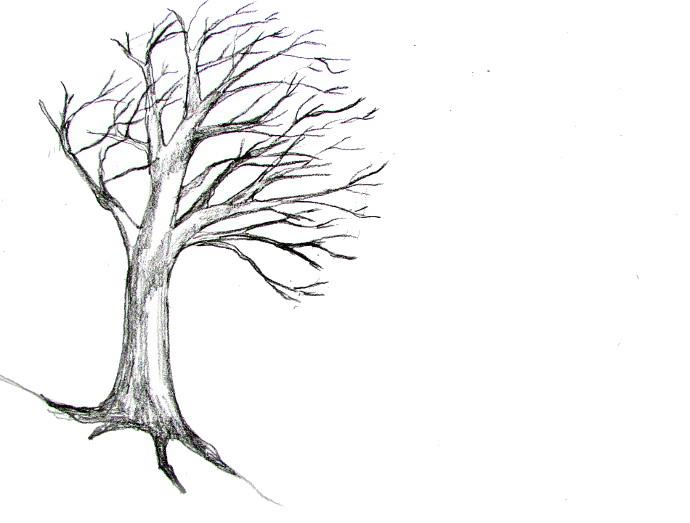 Drawn bush plane tree Art A Tree Draw Happy
