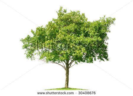 Drawn bush plane tree On Bush Reference com/display_pic_with_logo/126874/126874 Reference