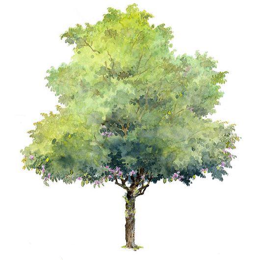 Drawn bush plane tree Psd 530 530 on Best