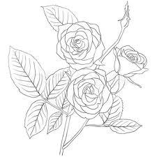 Drawn rose bush sketching Google bush rose rose stem