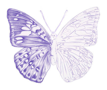 Drawn butterfly 5 Drawing How Step a