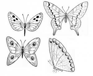 Drawn butterfly A Image Butterfly Draw How