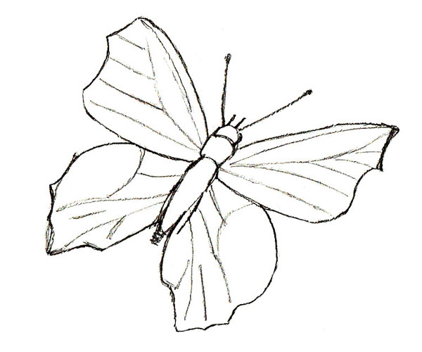 Drawn butterfly Butterfly Butterfly How step a
