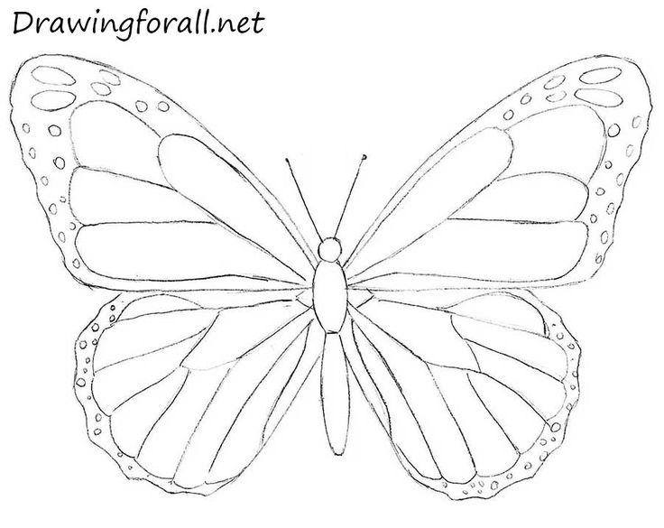 Drawn butterfly #4