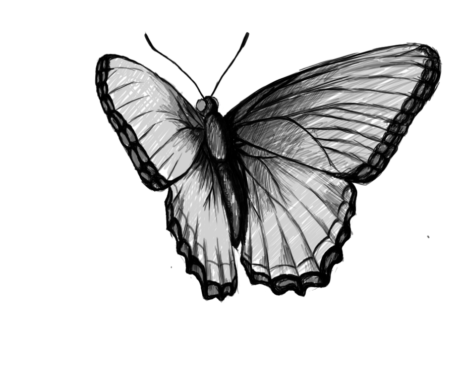 Drawn butterfly To Draw a needed my