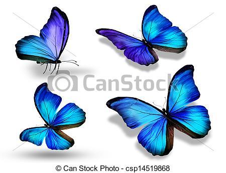 Drawn butterfly blue butterfly Butterfly Stock blue white