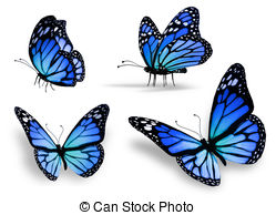Drawn butterfly blue butterfly Blue butterfly isolated Four royalty