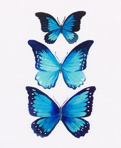 Drawn butterfly blue butterfly Lessons How Morpho Pinterest to