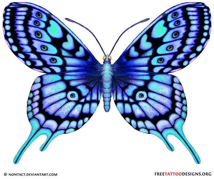 Drawn butterfly blue butterfly Blue And tattoo Butterfly 60