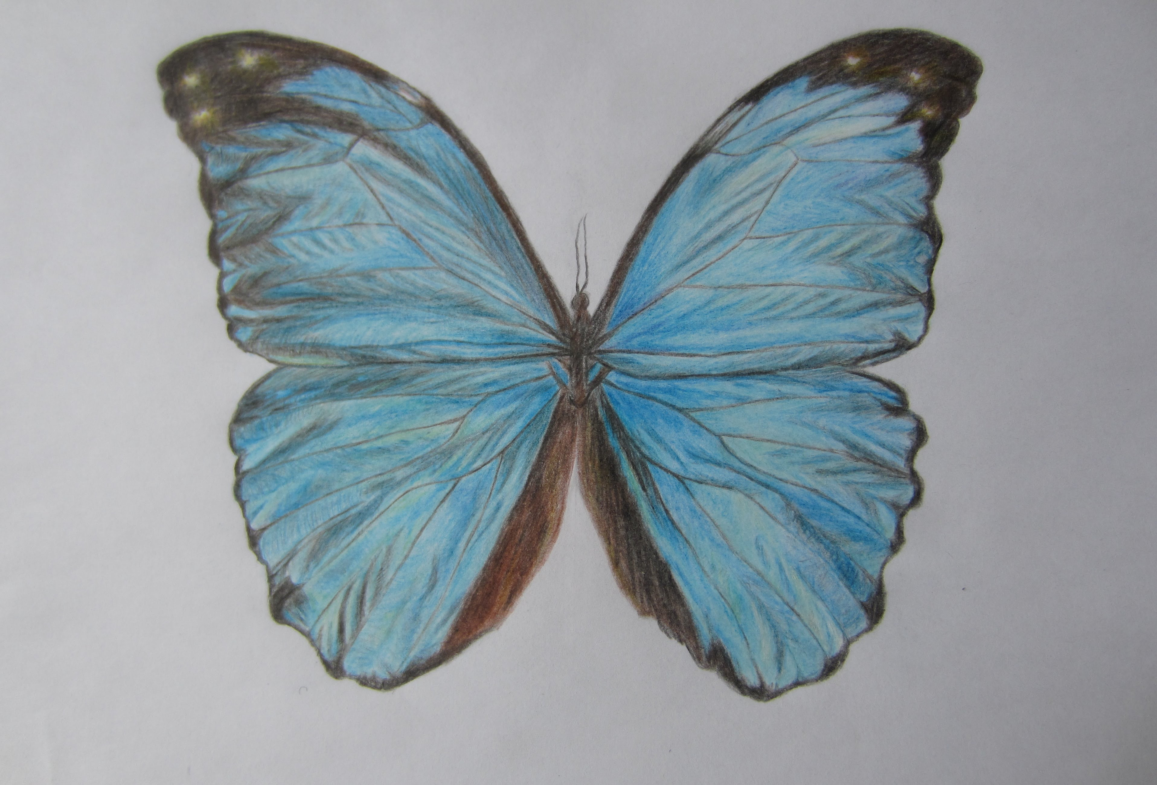 Drawn butterfly blue butterfly With color blue YouTube color